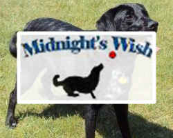 Midnight's Wish K9 5K Fun Run